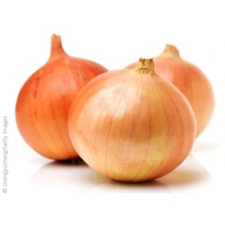Sipuli (Onion)